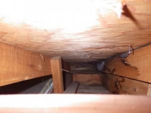 天井裏の雨シミの跡