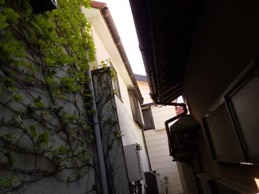 蔦の生えている外壁